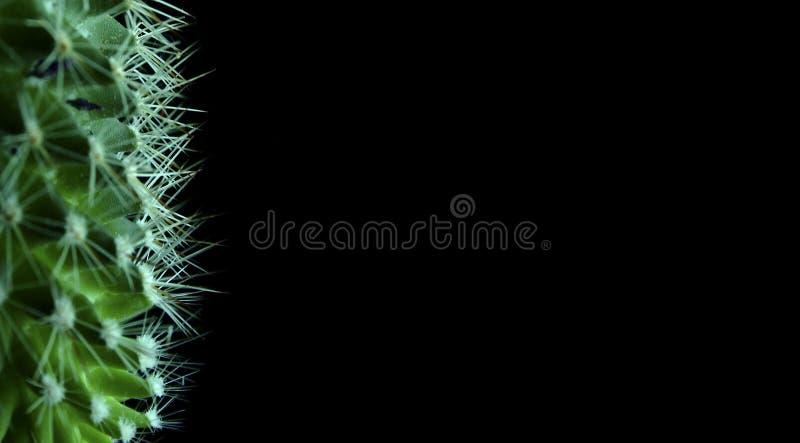 кактусы стоковая фотография