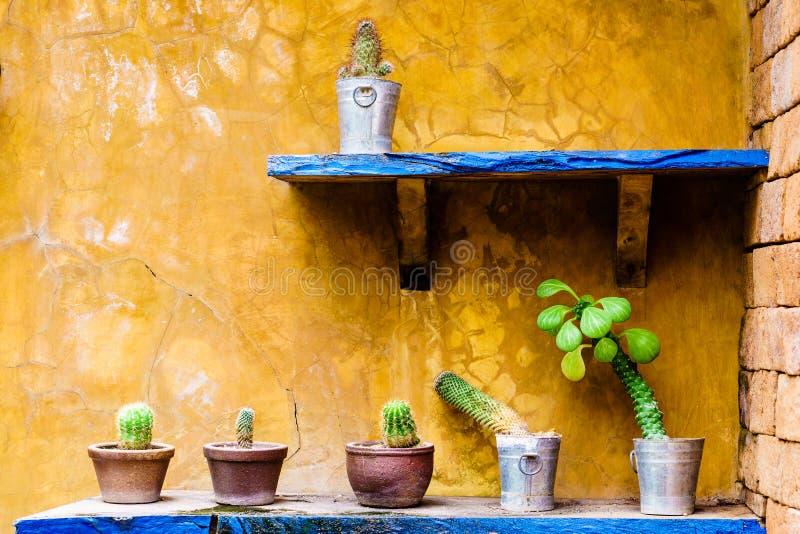 Кактус в баке в саде кактуса стоковые изображения