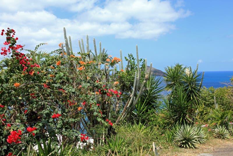 Кактус и бугинвилия в St. Thomas стоковые фотографии rf