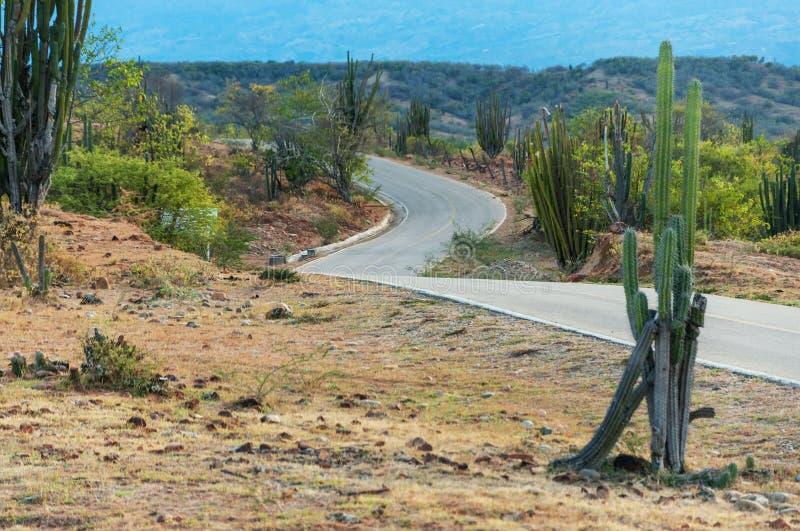Кактус и дорога замотки стоковое изображение