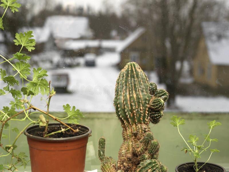 Кактус и зима стоковое изображение rf