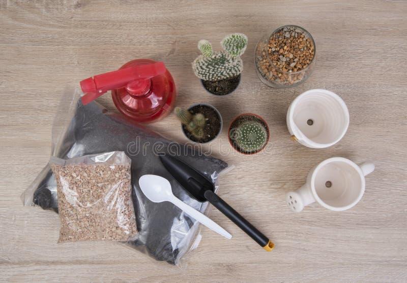 Кактус и инструменты стоковое фото