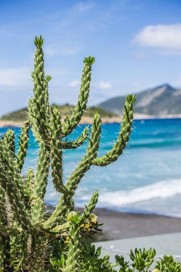 Кактус на побережье Мальорки стоковые фото