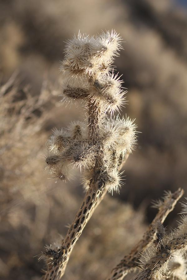 Кактус пустыни с отверстиями стоковые фото