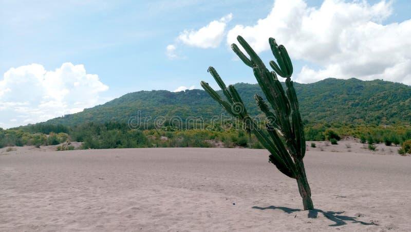 Кактус, пустыня, гора, голубое небо стоковое изображение