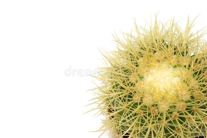 кактус солнечный стоковые фото