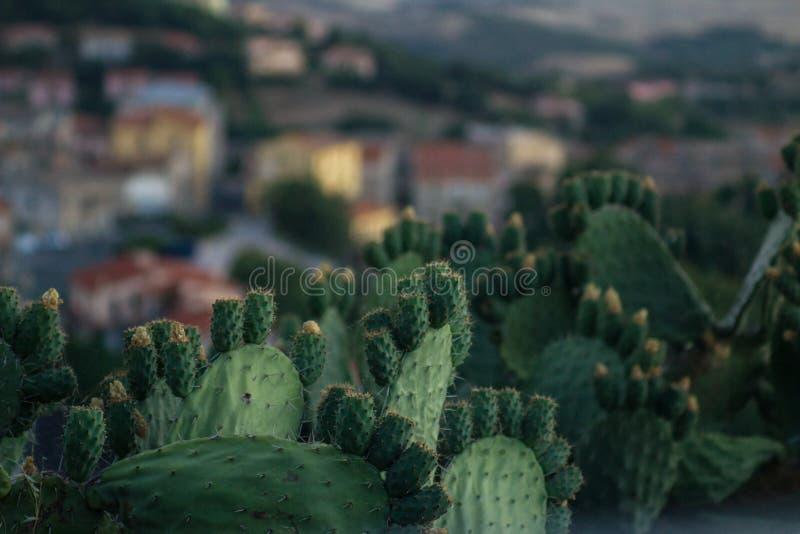 Кактус с плодоовощами и деревней на заднем плане стоковые изображения