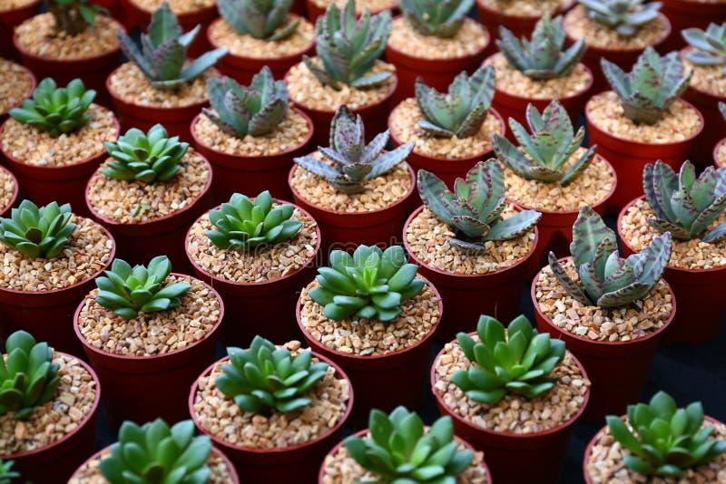 Download Кактус стоковое изображение. изображение насчитывающей houseplant - 81814937