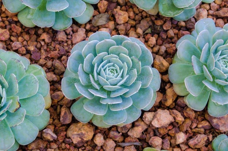 кактус fuerteventura земная Испания стоковые фотографии rf
