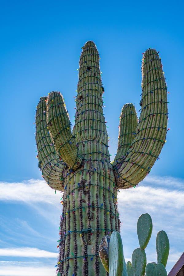 Кактус Saguaro с пестроткаными светами рождества стоковое изображение rf