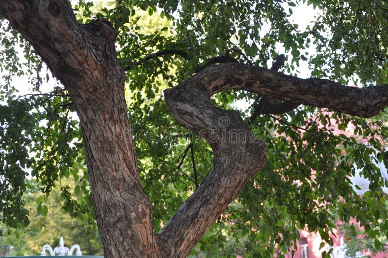 Как как дерево 15 стоковое изображение rf