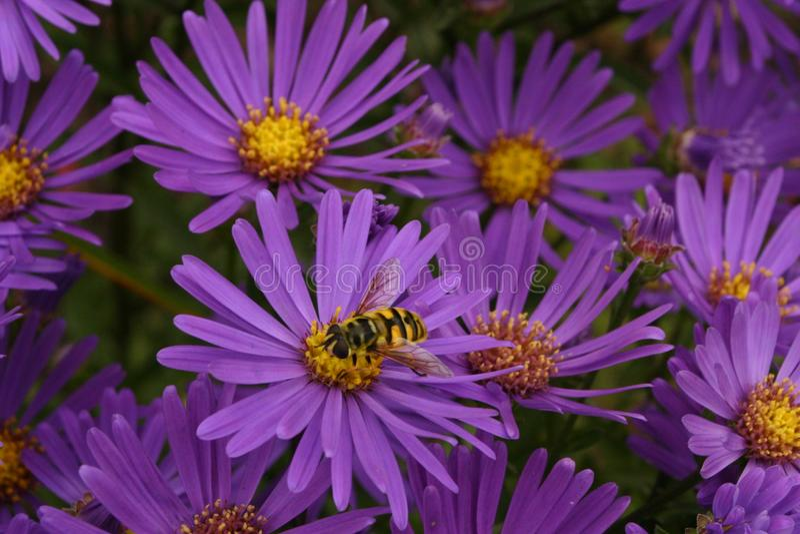 как пчела многодельная стоковые фотографии rf