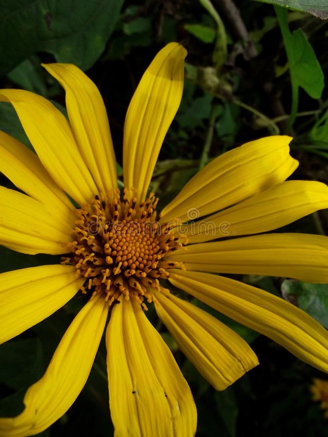 как цветок солнца стоковое изображение