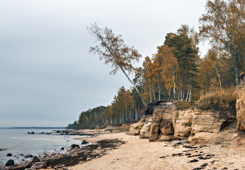 Каменистый пляж на заливе Рига стоковое изображение rf