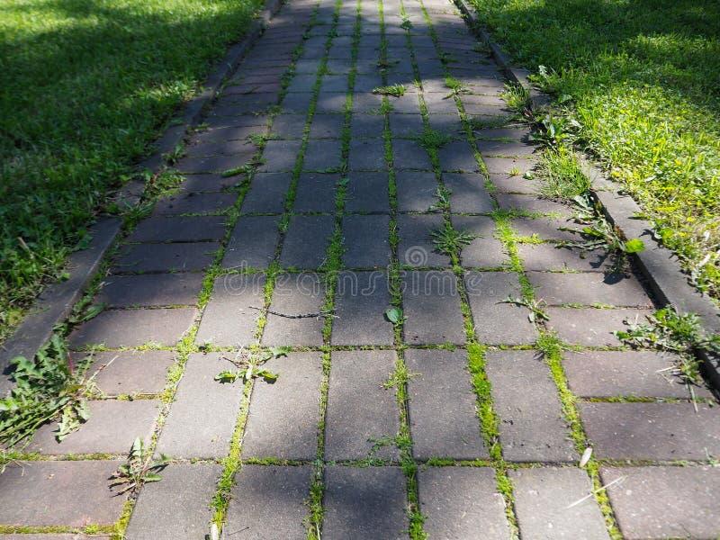 Каменная дорога с зеленой травой растя через ее стоковое фото