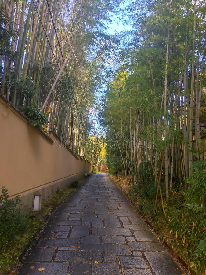 Каменная дорожка между свежими бамбуковыми лесом и стеной виска для предпосылки стоковая фотография