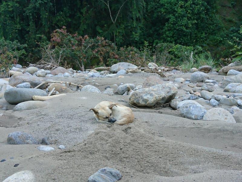 Каменная собака стоковое изображение rf