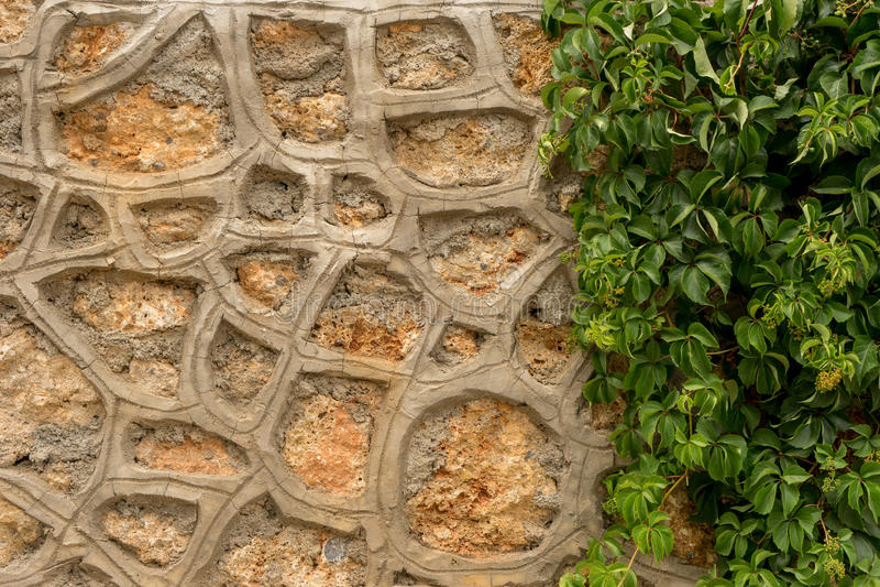 Каменная стена с зеленым плющом стоковые фотографии rf