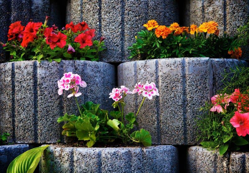 Каменная стена Flowerbed стоковое фото rf