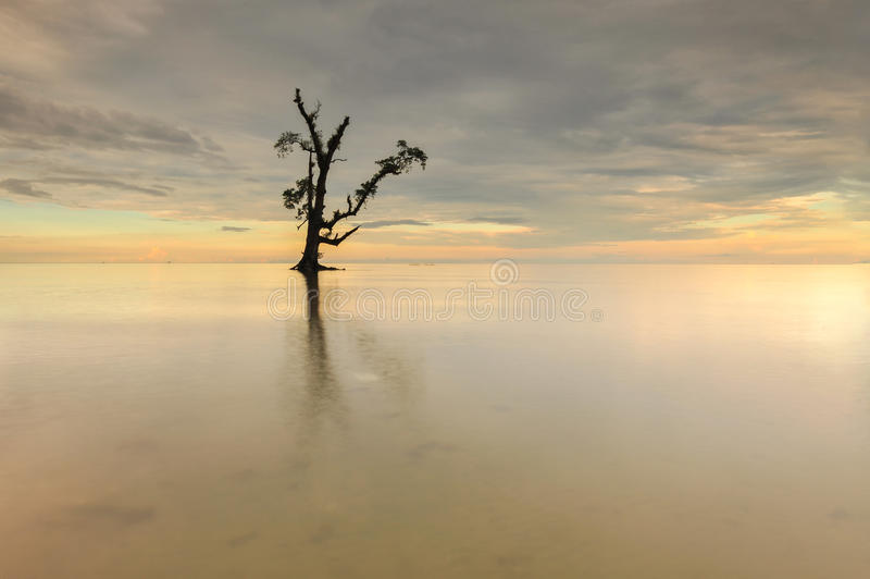 Каменное и одиночное дерево в море стоковое изображение