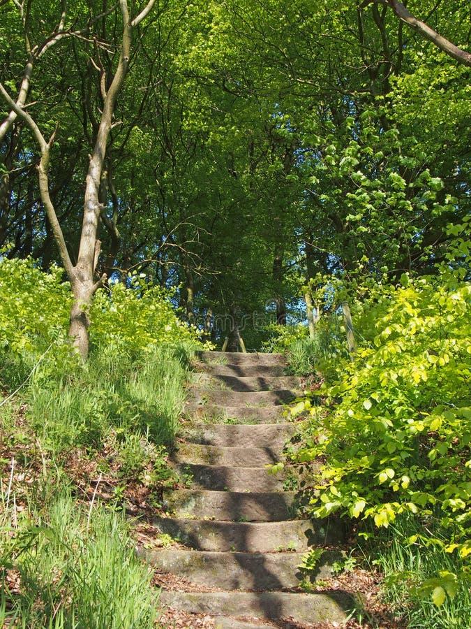 каменные ступеньки, ведущие по лесному пути к ярким солнцеосвещенным летним деревьям стоковое фото