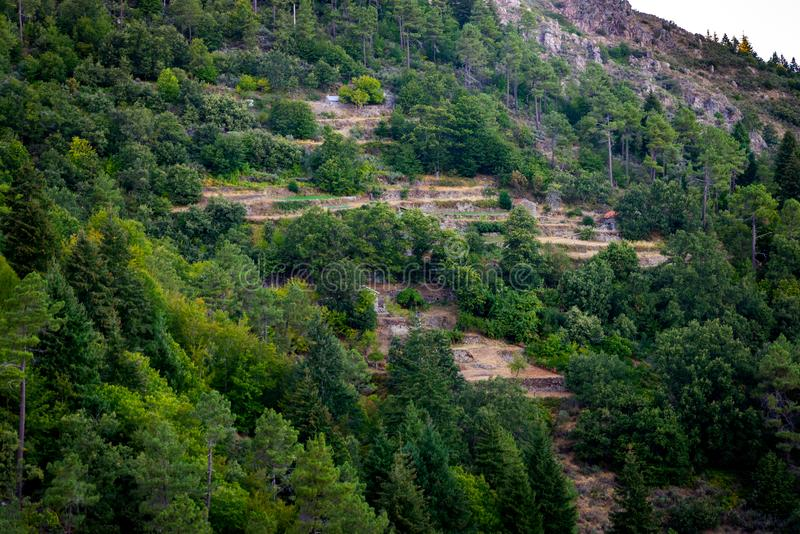Каменные террасы в горе с 2 домами и лесами стоковое изображение rf