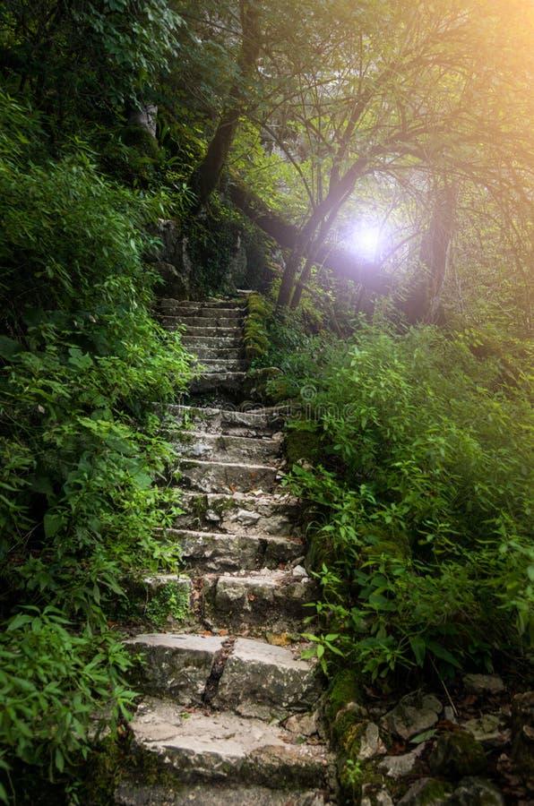 Каменные шаги в глубокий лес стоковое изображение
