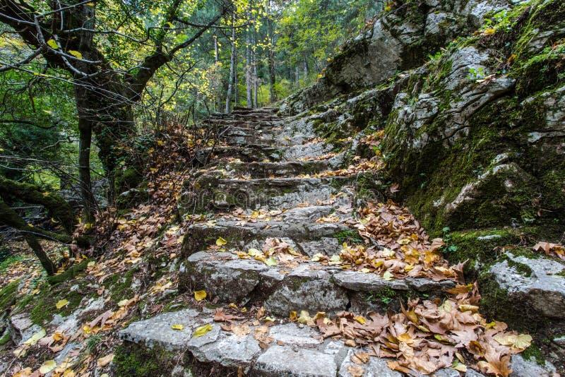 Каменные шаги в лес стоковая фотография rf