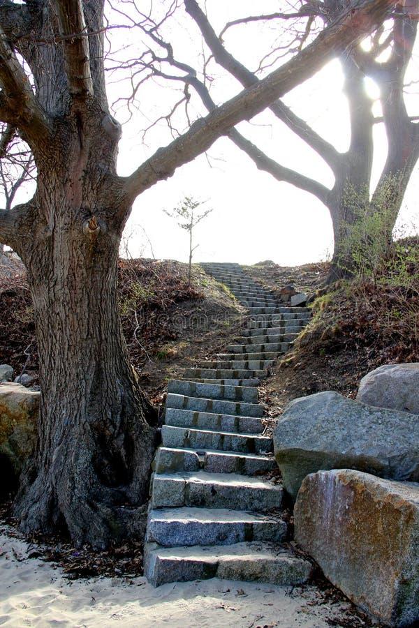 Каменные шаги идя за деревьями на парке форта этапа в Глостере Массачусетсе стоковая фотография