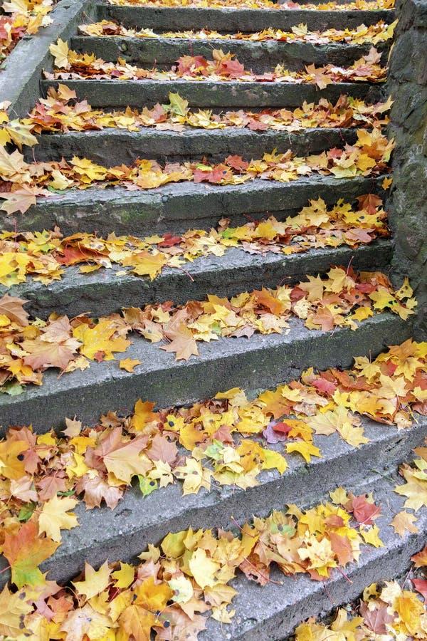 Каменные шаги покрытые с кленовыми листами стоковое изображение rf