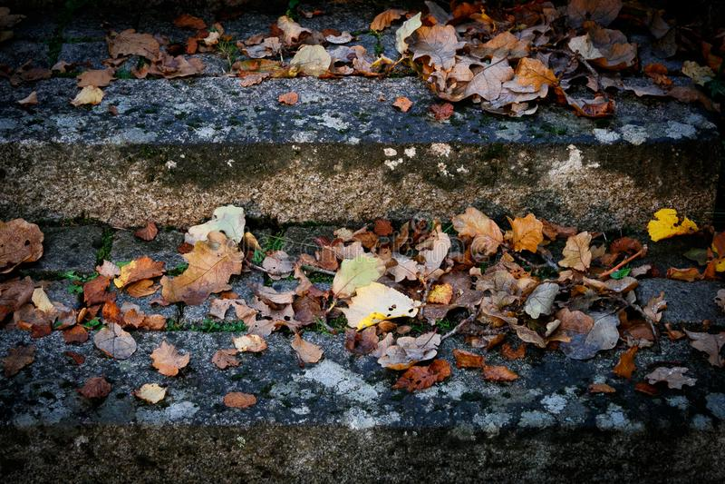 Каменные шаги с старой листвой стоковое изображение rf