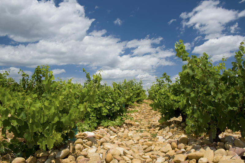 каменный виноградник стоковое изображение