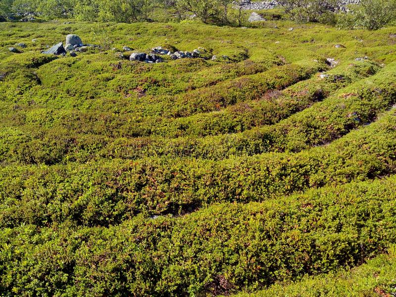 Каменный лабиринт острова Bolshoi Zayatsky Белое море, острова Solovetsky, Karelia, Россия стоковая фотография rf