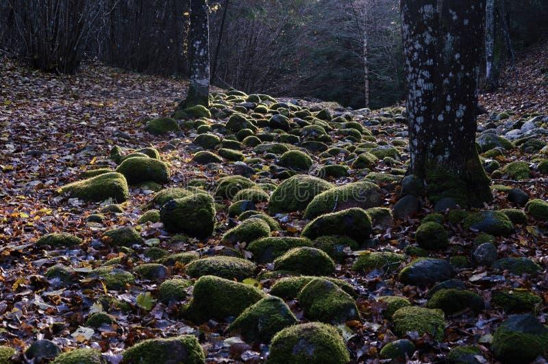 Каменный путь в лесе стоковые изображения