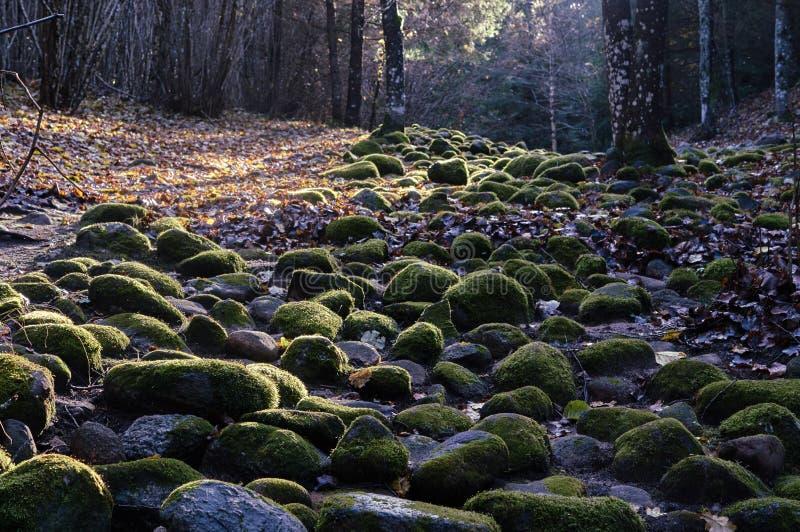 Каменный путь в лесе стоковое фото