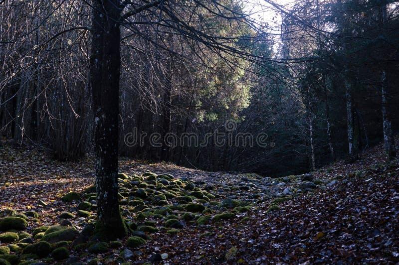 Каменный путь в лесе стоковые фото