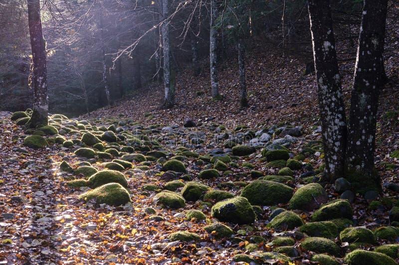Каменный путь в лесе стоковая фотография rf