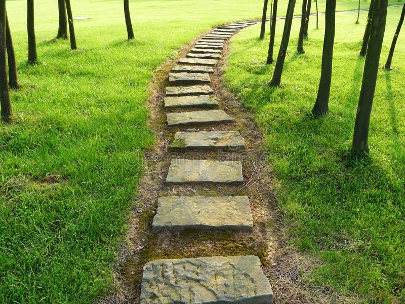 Каменный путь с деревьями стоковые фото