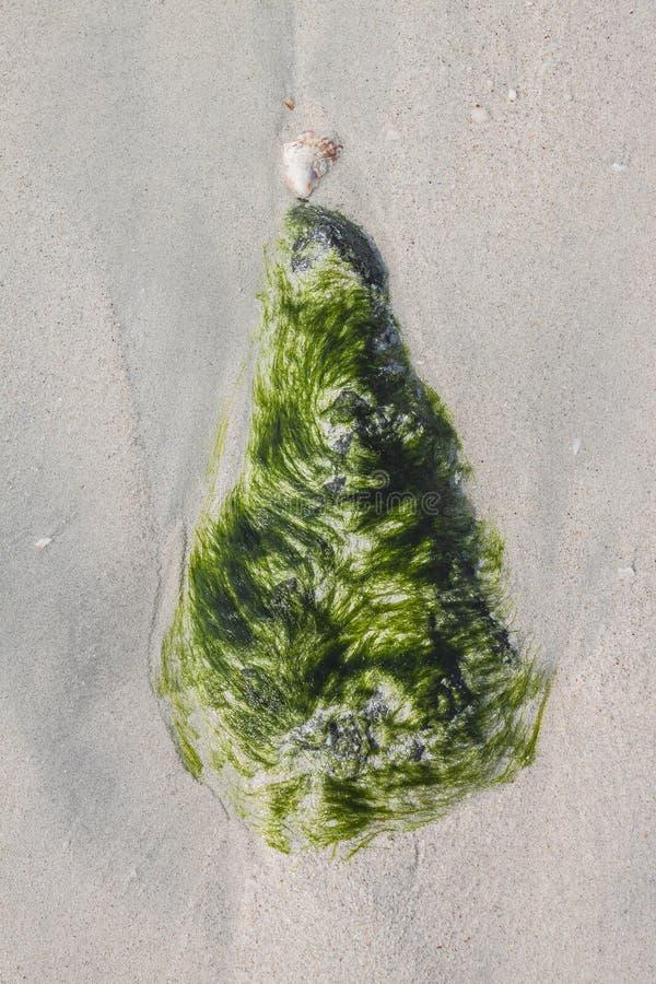 Камень в морской водоросли на море пляжа стоковые изображения rf