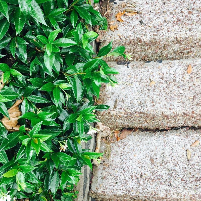 Камень и растительность контраста стоковая фотография