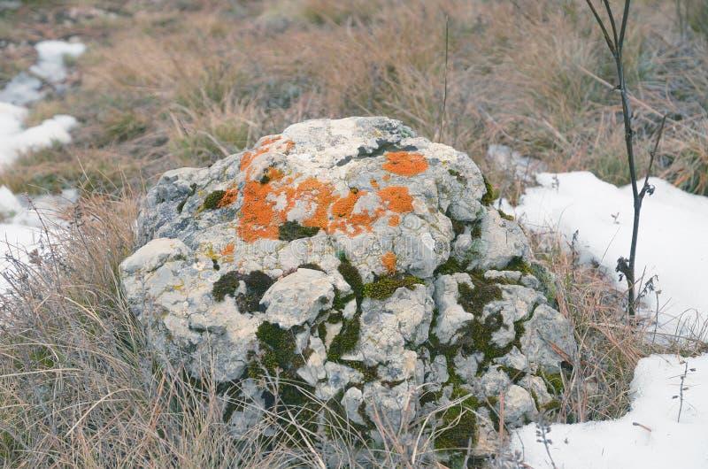 Камень крупного плана серый покрыл мох на траве в зиме в одичалом стоковые фотографии rf