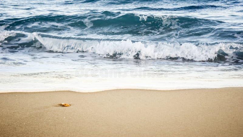 Камень моря стоковые фотографии rf