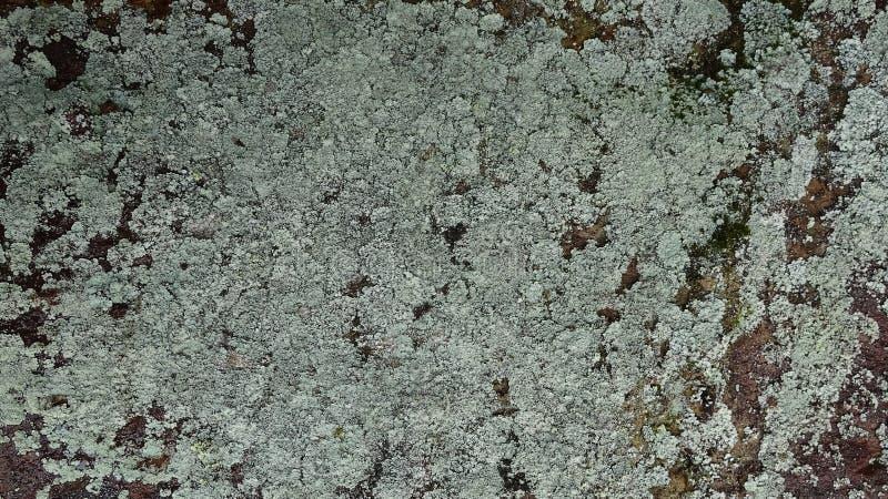 Камень покрыт с грибком стоковая фотография