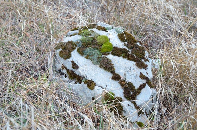 Камень предпосылки одичалый с мхом на траве осени стоковые изображения