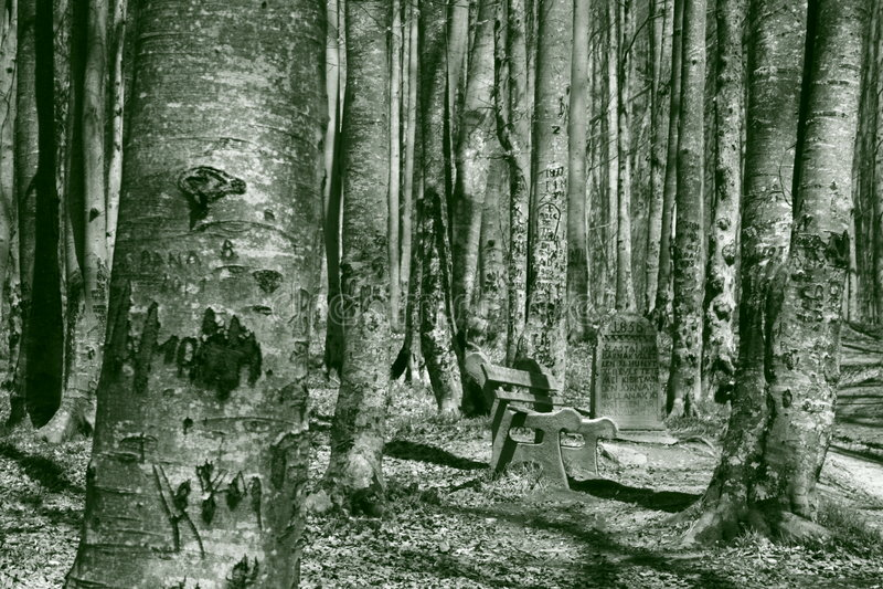 камень пущи стоковое фото rf