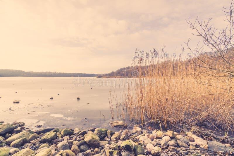 Камешки и тростники замороженным озером стоковая фотография