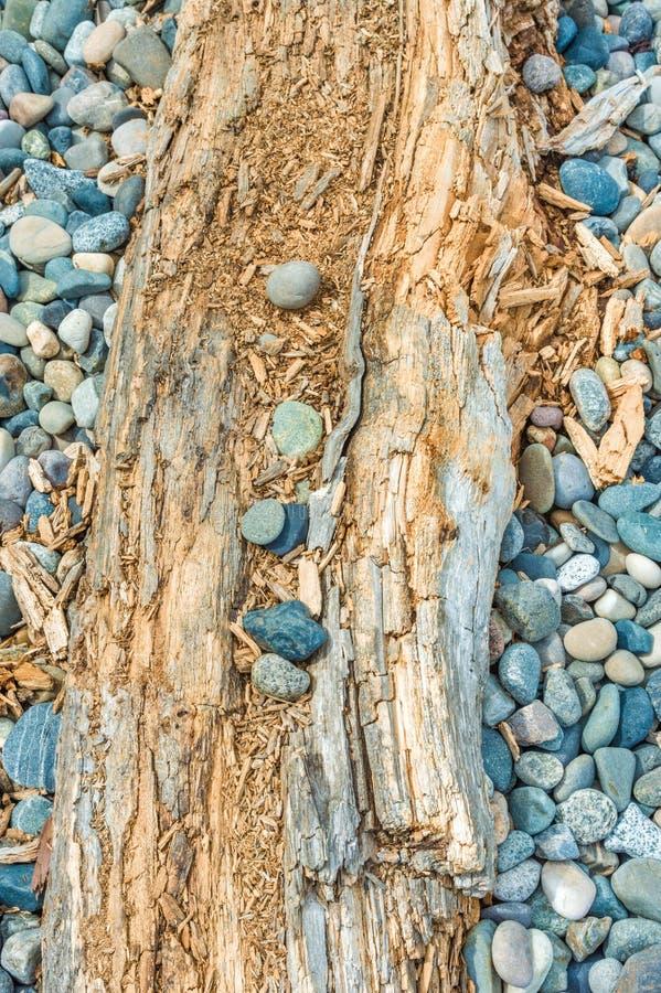 Камешки пляжа и журнал driftwood, Британская Колумбия, Канада стоковая фотография rf