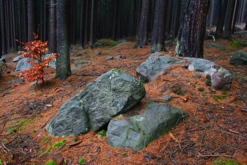 Камни в пуще стоковые изображения