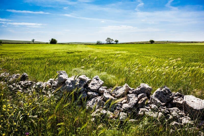 Камни в стране стоковое изображение