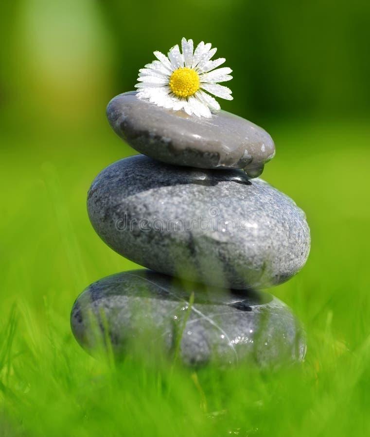 Камни и маргаритка в траве стоковые изображения rf